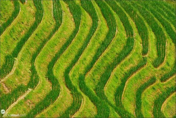 Graphics of Longji Titian rice terraces, Guangxi, China